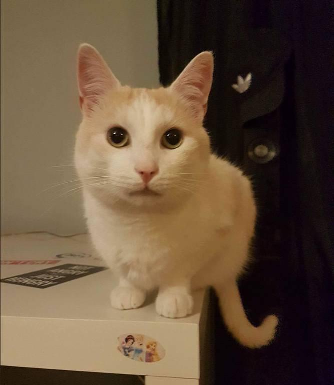 Akcja – Szukamy kotka!