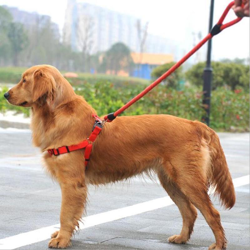 Obowiązek wyprowadzania psów na smyczy